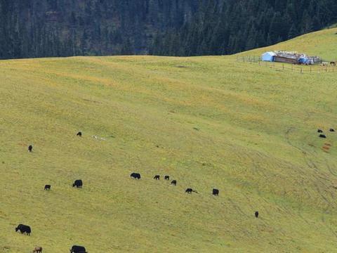 骑行4000米高城理塘,绝美毛垭草原与雪山相连