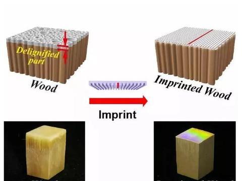 让木材成为高新材料——南大在木材纳米制造技术取得重大进展