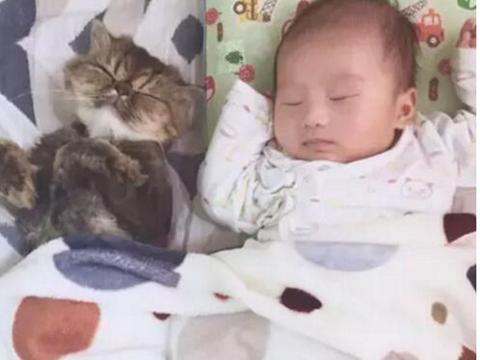 猫咪日夜守候怀孕主人,宝宝出生后还充当保姆角色,邻居都羡慕她