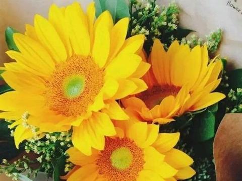 心理测试:你觉得哪朵向日葵最有活力?测你是不是有机会发家致富