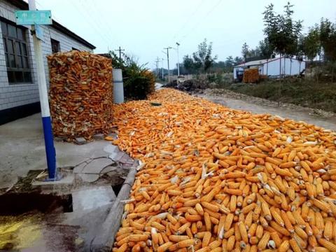 农民卖粮价,与网络报价差别有多大?对比一下!