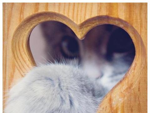 猫咪最常见的病症,铲屎官需注意