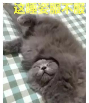 掀开被子,看到小奶猫的睡姿,主人脸红:自愧不如