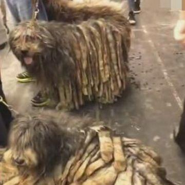 三只狗狗遇上懒惰大叔,日子过得比流浪狗都差,画面让人心酸