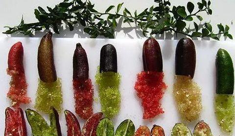 """它号称""""水果中的鱼子酱"""",远看像老黄瓜,一斤高达上百英镑"""
