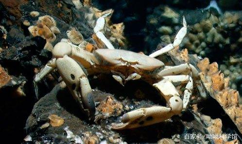 英国泰晤士河螃蟹已发现被大量塑料污染,咱们吃蟹大国该怎么办?