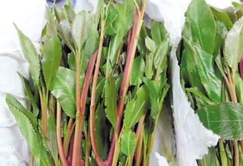 """""""东非罂粟""""、""""阿拉伯茶"""",这种形似苋菜的恰特草是什么毒品"""
