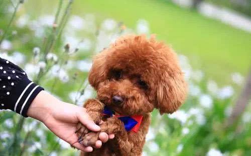狗狗的这些坏习惯,一岁之后就很难再改了,你家狗子有吗?