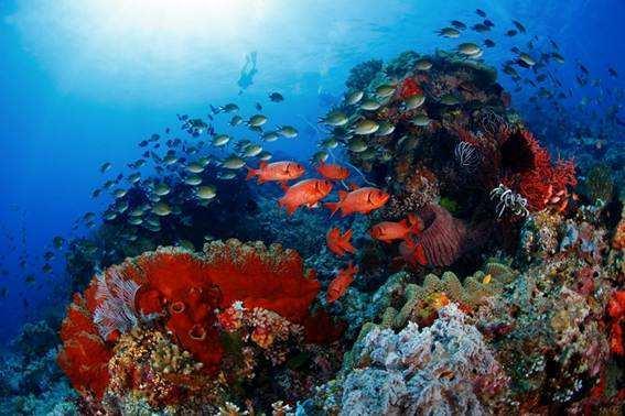 被人类摧毁的自然奇观之,世界最美珊瑚礁,印尼海底亚马逊!