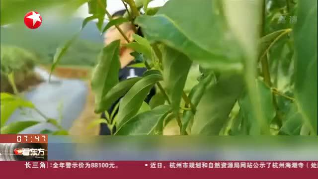 云南临沧:特大贩毒案告破  缴获冰毒23.39公斤