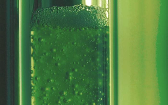 藻类燃料生物反应器吸收二氧化碳的效率比树木高400倍