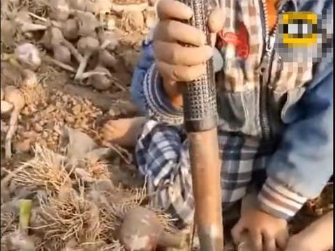 4岁农村男孩帮父母剪大蒜,动作熟练一气呵成,非常懂事让人欣慰