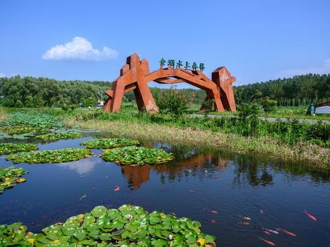 """江苏最大的人工生态林,被誉为""""水上兵马俑"""",知道的游客却不多"""