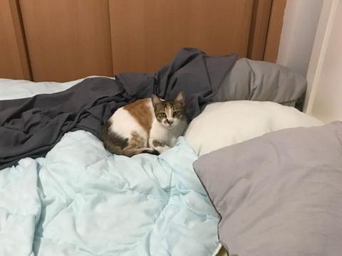 土耳其男子明明没养猫,回家却见床上超鄙视眼神:你谁啊?