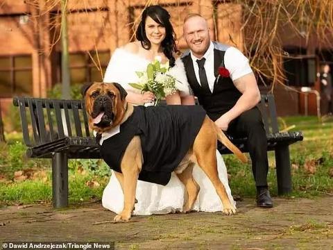 英国斗牛犬血癌晚期,主人将婚期提前4个月宾客无法到齐也不后悔