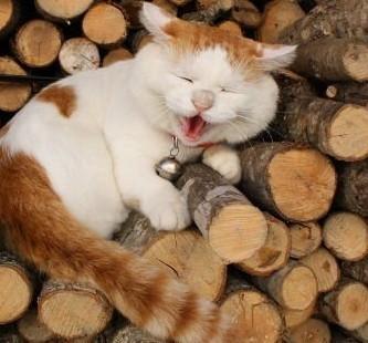 哈哈哈橘猫从来没有让我失望过,凭实力长胖