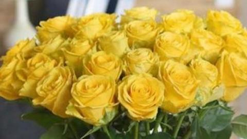 """喜欢菊花,不如养盆""""玫瑰精品""""金香玉,鲜艳美丽,高贵优雅"""