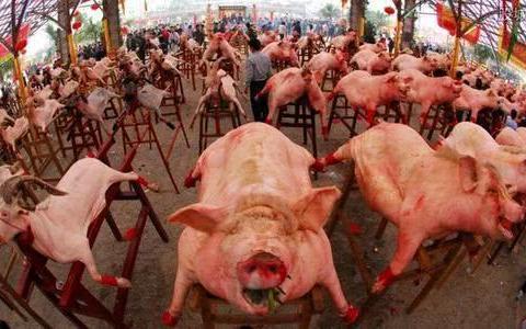 猪大肠跟猪肺里面毒素多,不能吃?营养师一次性告诉你答案