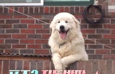 明星狗狗见人必须打招呼,地图上都标记了它的位置!