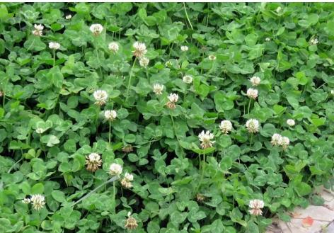 甘肃兰州秦王川国家湿地公园的花