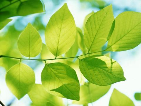秋天养花注意这6点,不招虫不烂根,轻松过冬长势好