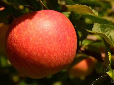 秋季不妨多吃4种食物,改善睡眠质量,预防失眠和神经衰弱