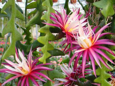在家中养这几种植物,亲朋好友都羡慕坏啦!