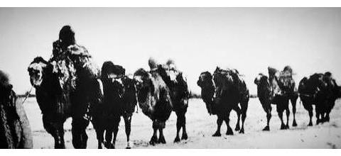 驼道依稀,历史云烟中的召河(设并草原)曾是旅蒙商羊马驼集散地
