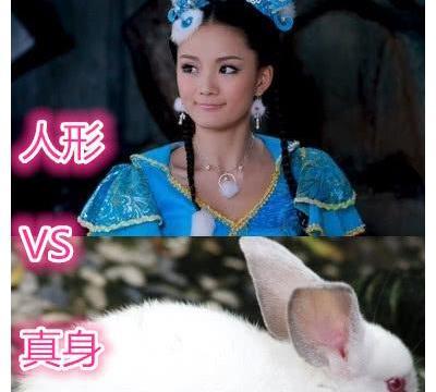 活佛济公:人形VS真身,白雪可爱,白灵灵动,看到乌金:脱粉了