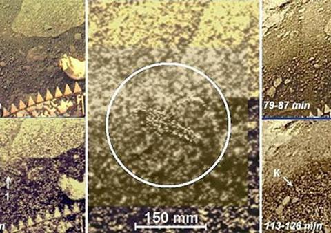 金星存在生命?俄美科学家团队希望找到金星上的外星生命