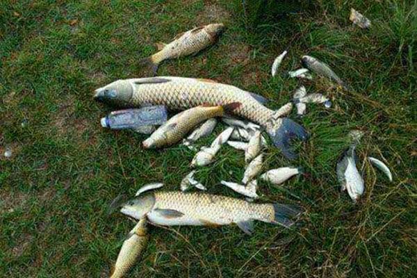钓鱼实用小绝招,帮你解决大问题,用好了渔获轻松翻几倍!