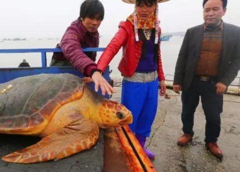 """捕到罕见""""黄金龟""""被人高价来收,海龟一个行为他决定放生"""