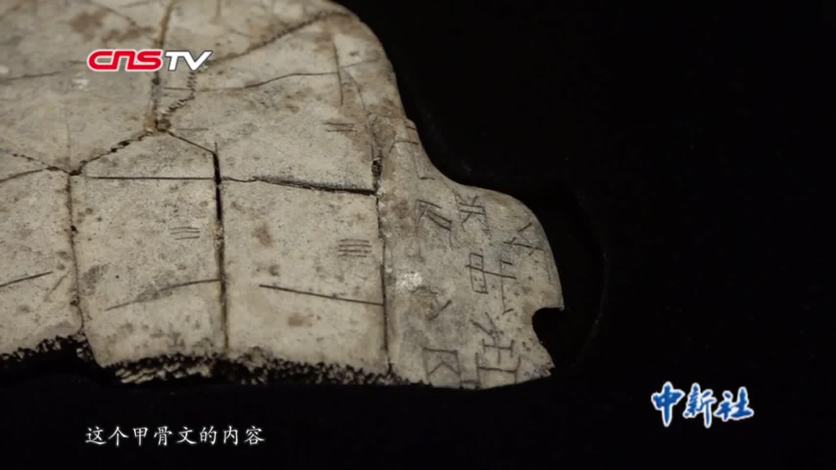 中国国家博物馆首次大规模展示馆藏甲骨