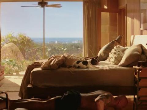 巨石强森和自家狗狗拍电影,壮汉和萌宠,反差真大