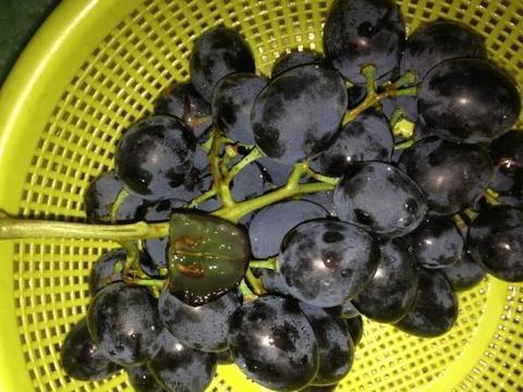 注意这4个地方,轻松分辨黑加仑和蓝莓