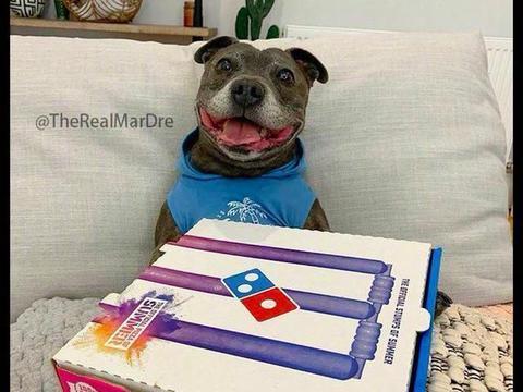 狗狗以为主人买了披萨笑得好开心,结果一看是沙拉,笑容就消失了