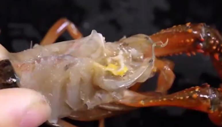 """小龙虾头部里到底是""""虾黄""""还是""""屎""""?网友:看完解开多年疑惑"""