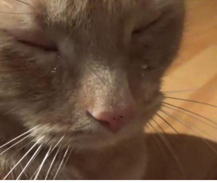 橘猫满含泪水走来,仿佛受了很大委屈,主人知道原因后哭笑不得