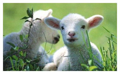 生肖羊(女命)运势,凶在健康,好在事业和人际运势