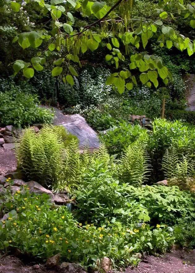 不用到花店买盆栽花,用这几个技巧布置景观,在院子布置天然花园