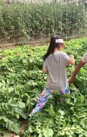 甜馨生日贾乃亮送祝福却无法见面,李小璐被拍带女儿体验农村生活