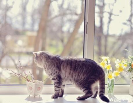 猫为什么喜欢趴在窗户,朝外看?
