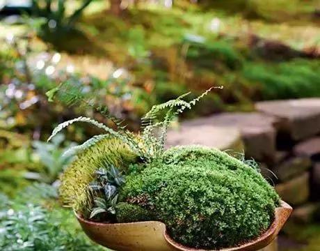 苔藓的世界,一草一天堂
