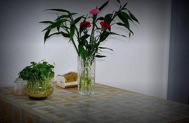 """连细菌都""""害怕""""的3种花,远离病菌侵犯,家里该多养几盆"""