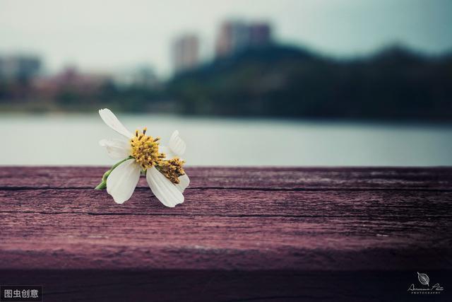 你总要一个人,尝遍所有的情感孤独