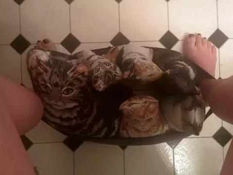 先天性对猫过敏的她,找到一个完美方案,养了一群猫!