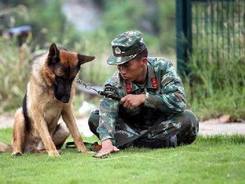 某警犬训练所曝出虐待训练犬,训练期间被鞭打、脚踹、吊在空中甩