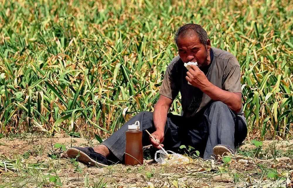 又到大蒜播种季,连年重茬种会减产吗,蒜农们意见咋不一样?