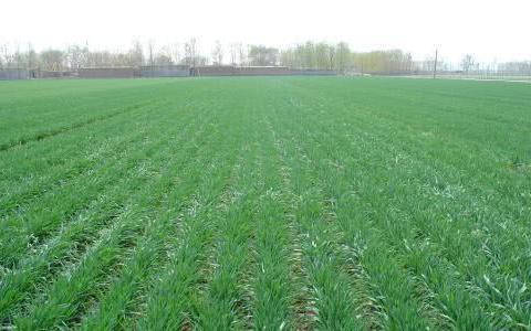 """小麦不能出苗?播种前做好这1点,麦苗才能""""齐、全、壮"""""""