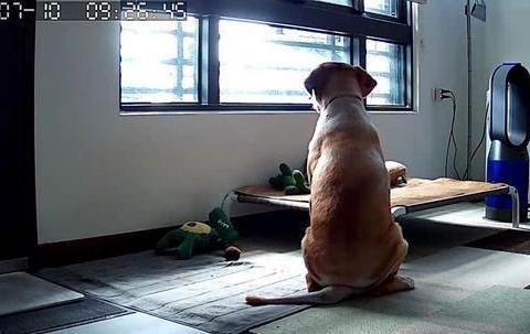 狗狗坐床边等主人醒来,超温馨画面,被主人用4个字破坏